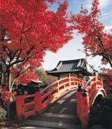 Cours japonais, Cours de japonais